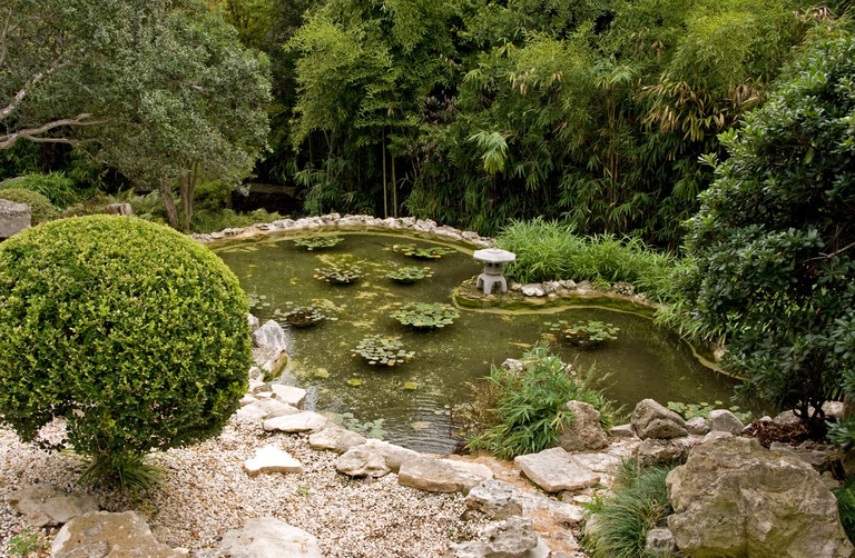 Austin's Zilker Park Botanical Gardens features this Japanese koi pond