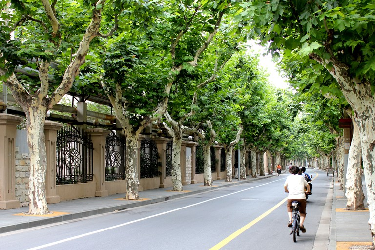The former French Concession tree-lined streets in Shanghai, China