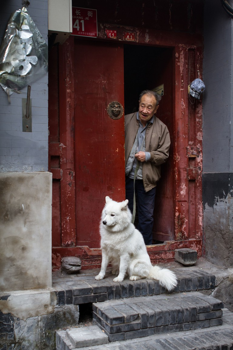 Chinese man and his Samoyed