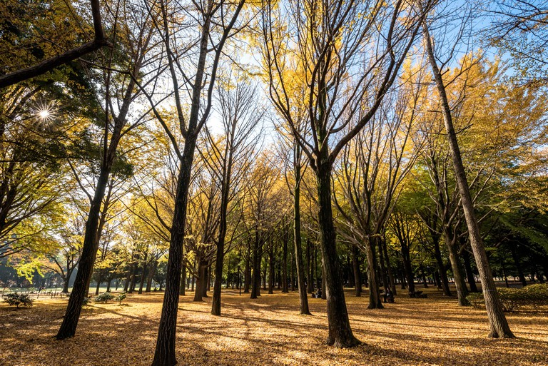 Yoyogi Park, Tokyo, Japan.