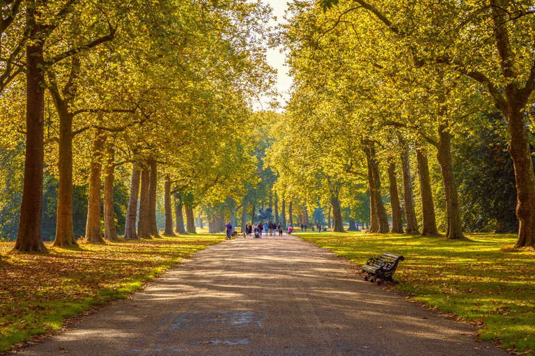 Tree lined street in Hyde Park London, autumn season