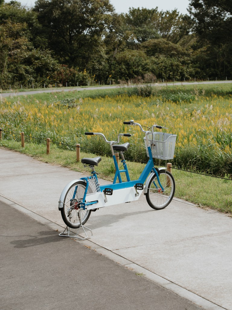 Cycling is popular in Hitachi Seaside Park, Ibaraki