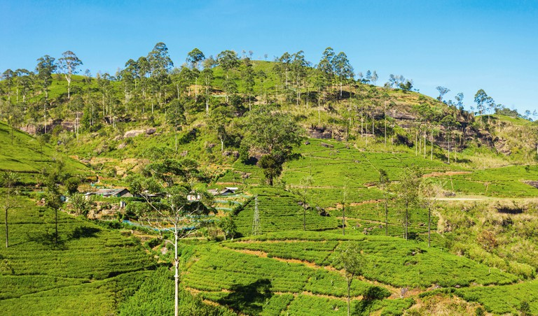 Nuwara Eliya is home to a number of tea plantations