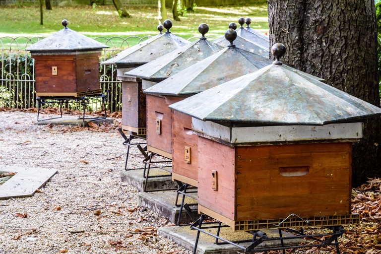 Wooden beehives with hexagonal zinc rooftop at the foot of a horse chestnut tree in the Luxembourg garden in Paris, France, on a sunny morning.