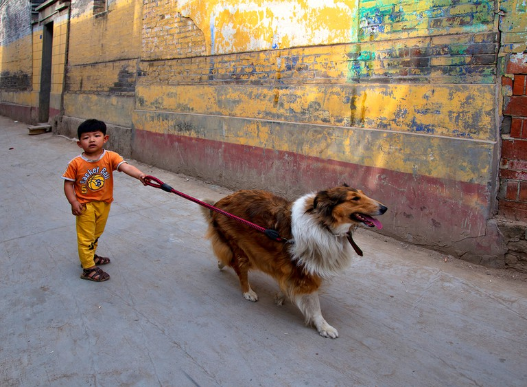 Young boy walking his dog in China