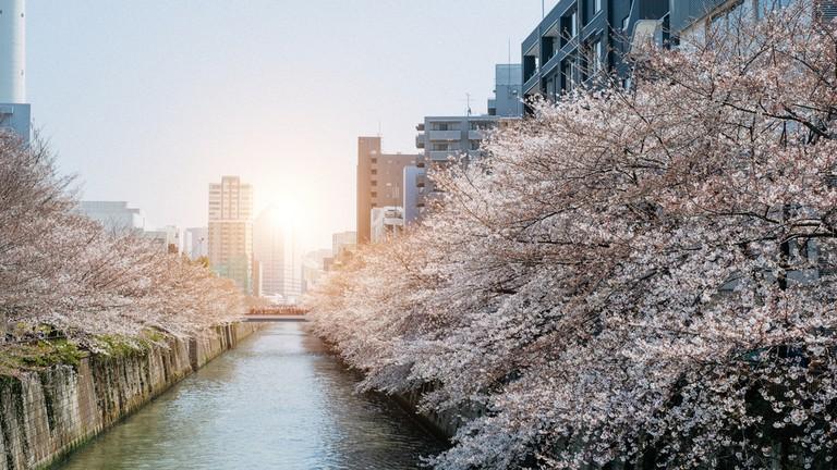 Naka Meguro, Tokyo.