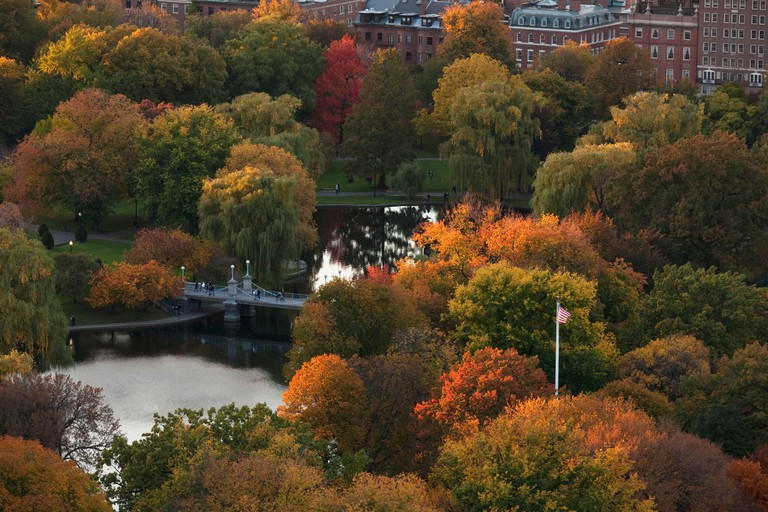 Autumn trees in a park, Boston Public Garden, Boston, Suffolk County, Massachusetts, USA