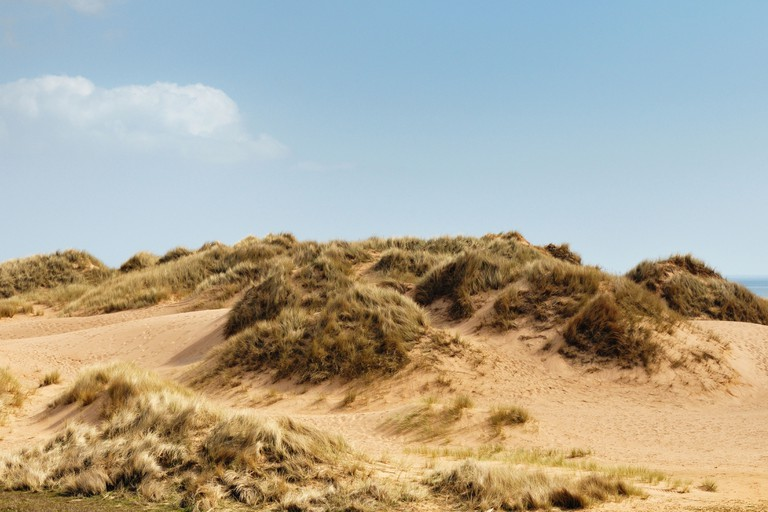 Details of Sand Dunes at Balmedie and Menie, an area being developed as a Golf Course by property speculator Donald Trump. Image shot 2011. Exact date unknown.