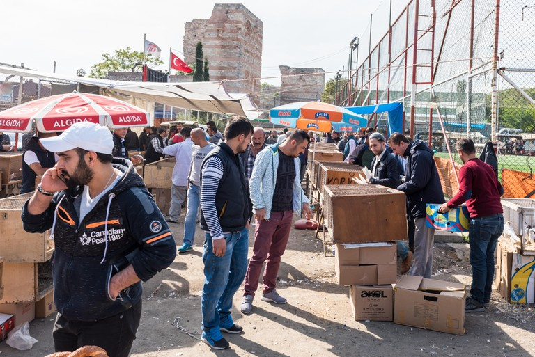 Pigeon market in Istanbul,Turkey.