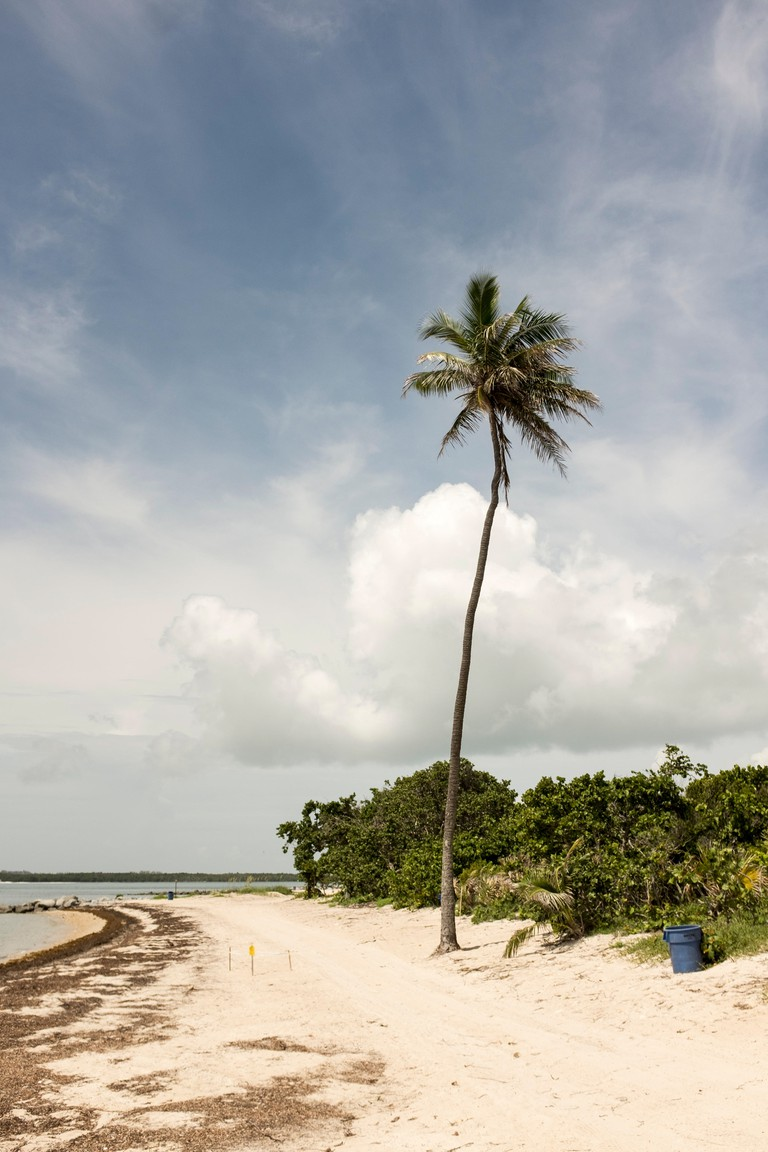 White sandy beach of Virginia Key in Miami, Florida