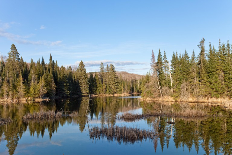 Algonquin National Park, Canada.
