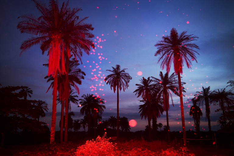 Palmtree landscape at sundown, Igbo-Ora, Nigeria