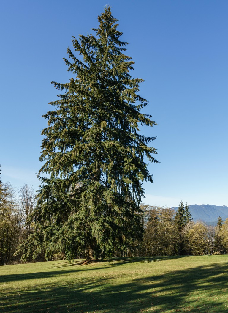 Burnaby Mountain park on sunny day