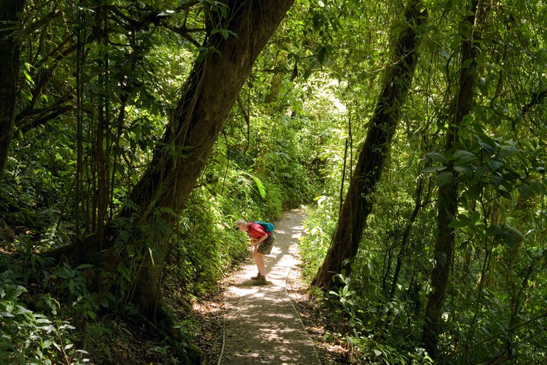 A visitor along secluded path in the Monteverde Cloud Forest Preserve, Costa Rica.