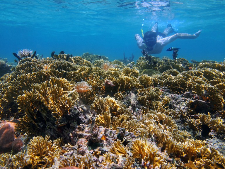Man underwater snorkeling in Costa Rica in a shallow coral reef of the Caribbean sea