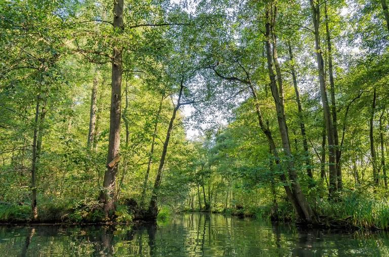Spreewald, landscape near Berlin
