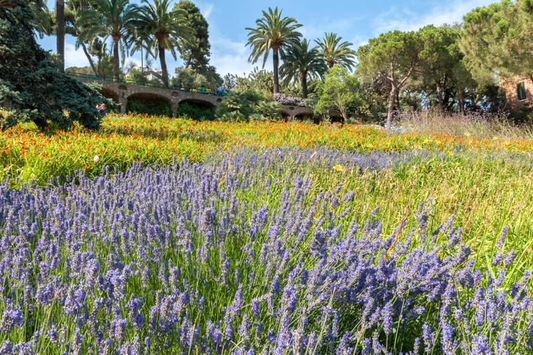 Park Guell garden, Barcelona.