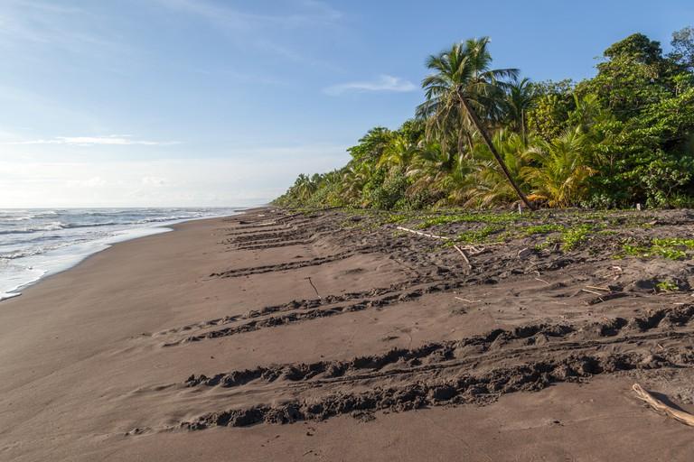 Sea turtle tracks in Costa Rica