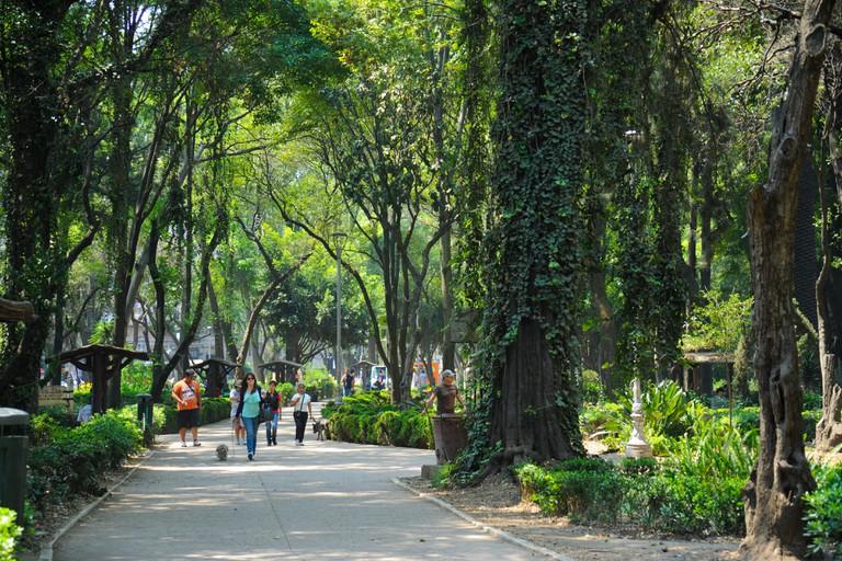 Parque Mexico (Mexico Park) in the Condesa and Roma neighborhood of Mexico City, Mexico