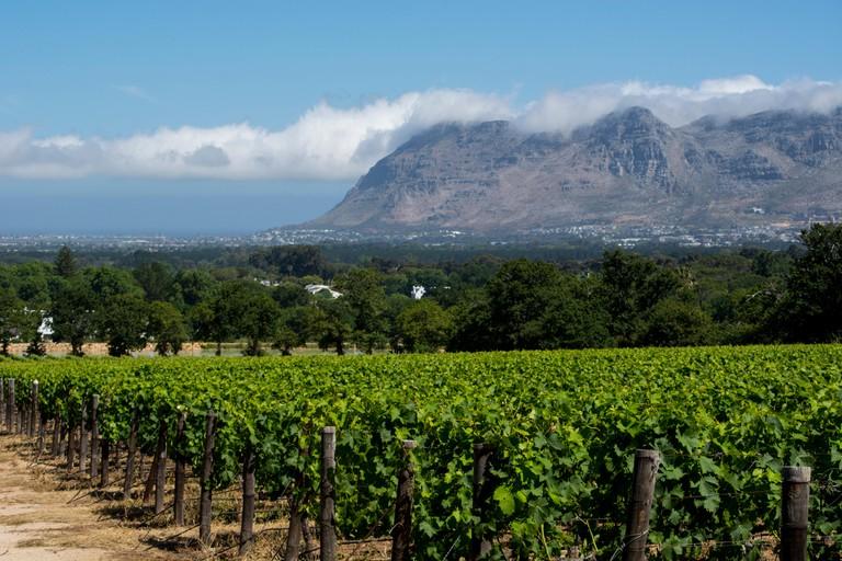 Groot Constantia Winery (Landgoed Estate)