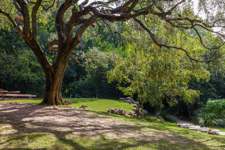The Gulbenkian Gardens are among the prettiest in Lisbon