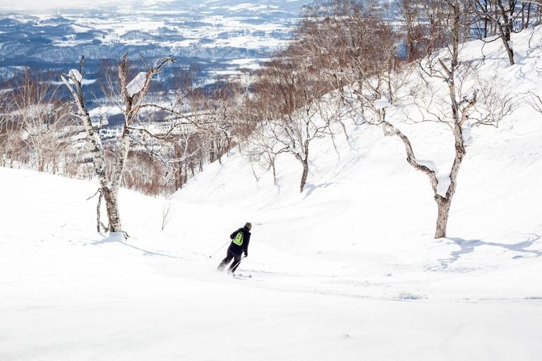 Woman skiing off-piste through birch trees in Niseko, Japan.
