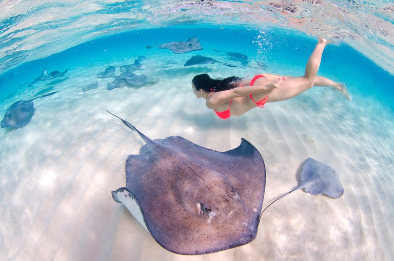 Swimming with Stingray in the Cayman Islands