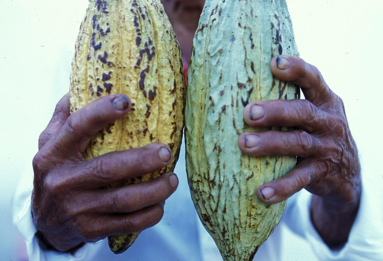 Mexican farmer with cacao beans, Esquipulas, Guatemala