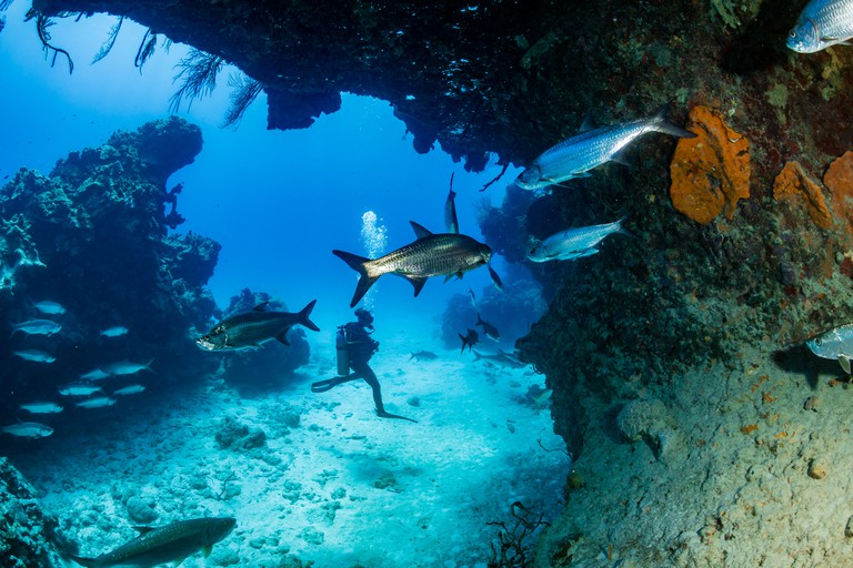 Diving in Grand Cayman