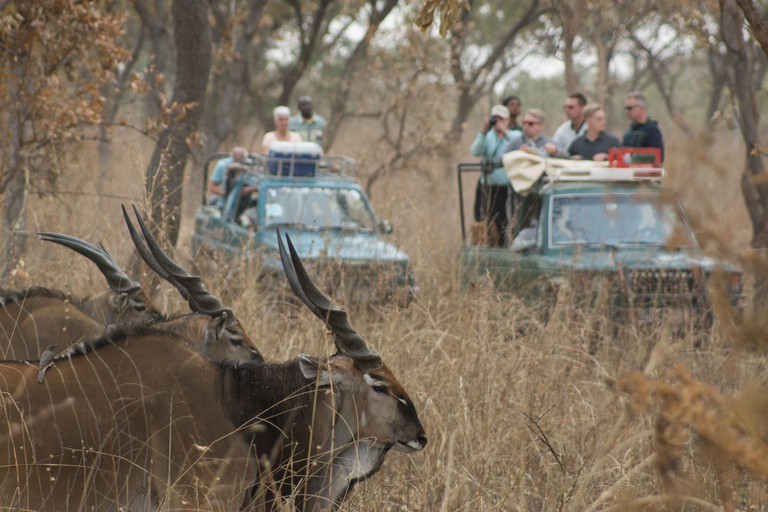Tourists observe the Western Giant Lord Derby Eland on safari in Fathala, Senegal