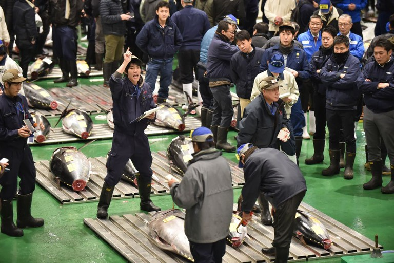 Wholesalers participate in a tuna auction at Toyosu fish market