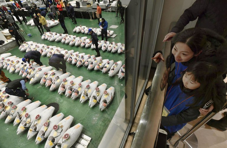People observe tuna auctions from an upper-level deck at Tokyo's Toyosu fish market
