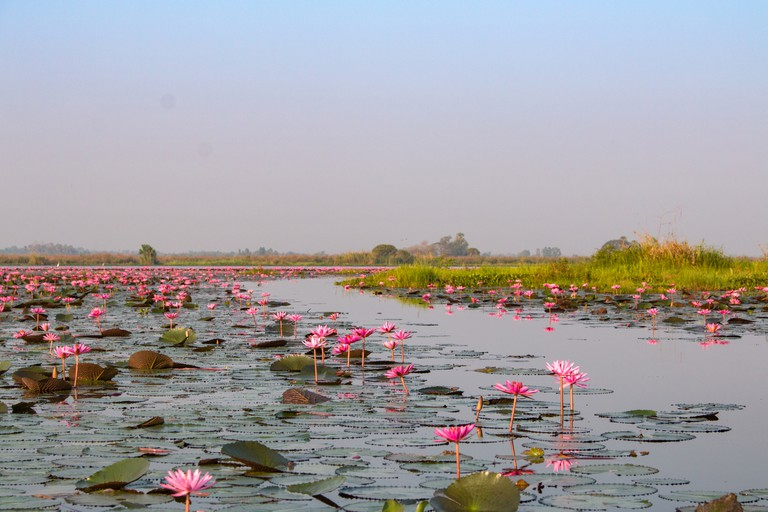 Talay bua daeng or Red lotus lake in UdonThani, Thailand