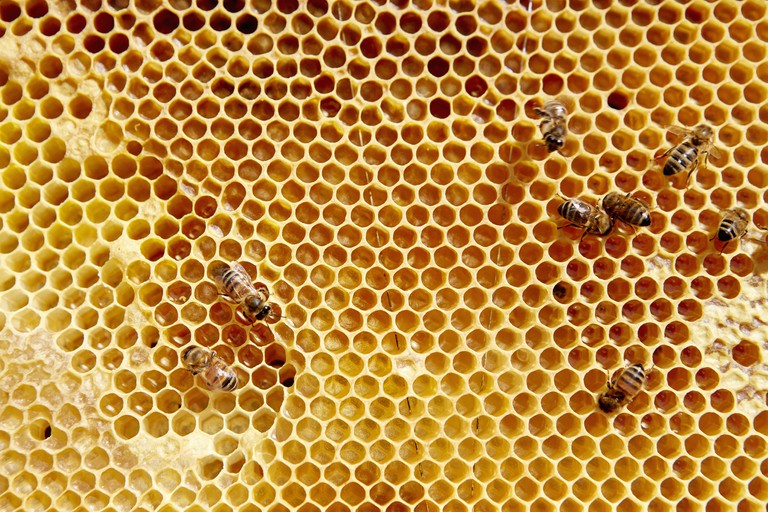 A wooden frame with honeycomb pattern with a small number of bees.