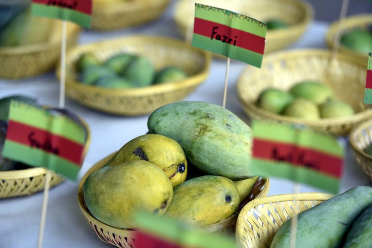 29th Mango Festival At Dilli Haat