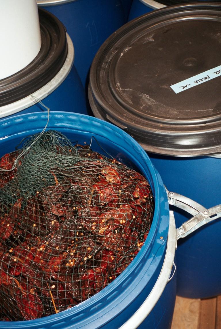 Pasilla Mixe chilli