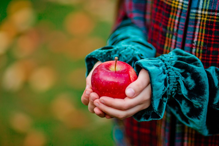 A girl holding a red apple in her hands in the autumn garden on a blurred background, place for text. Harvesting organic apples.