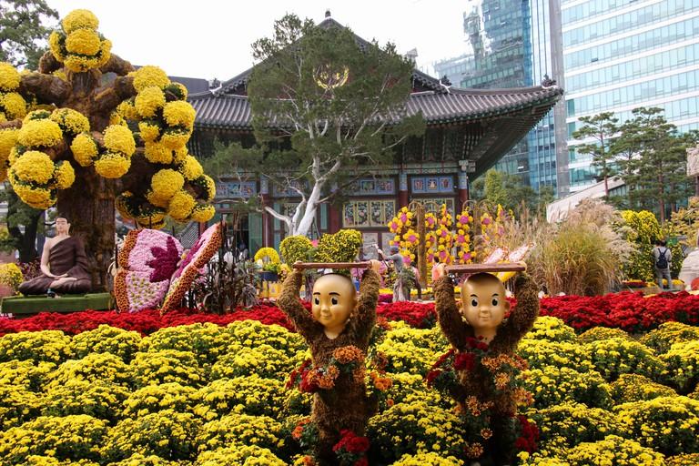 Chrysanthemums festival at Jogyesa Temple in Seoul, South Korea