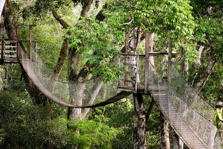 Inkaterra canopy bridge Tambopata National Reserve Puerto Maldonado Amazon Area Peru