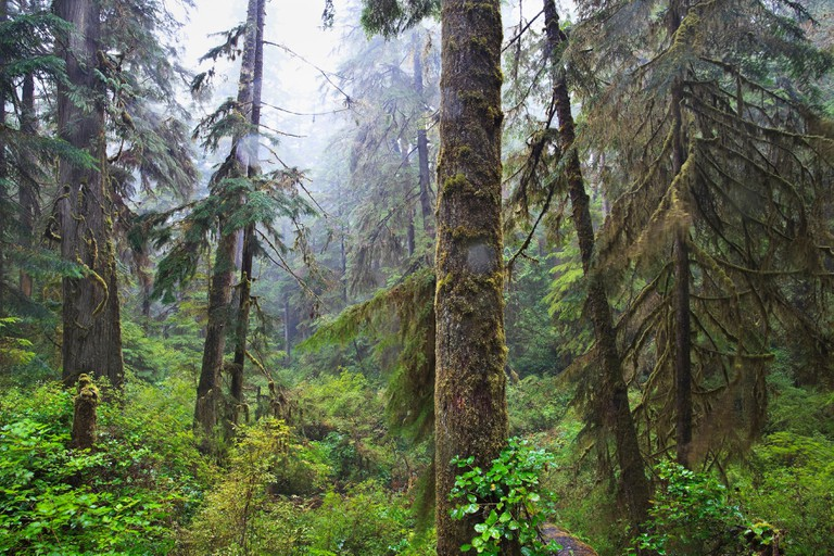 Old-growth rainforest, Pacific Rim National Park