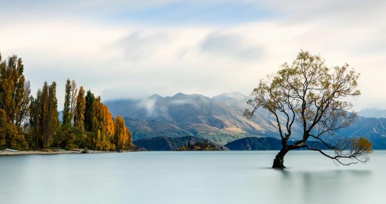 The iconic lone tree of Lake Wanaka, New Zealand.