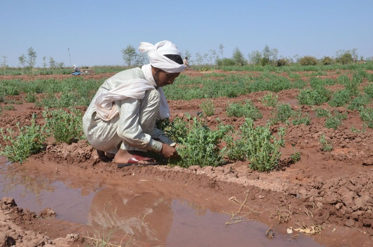 NIGER-AGRICULTURE-ENVIRONMENT-ECONOMY-POVERTY