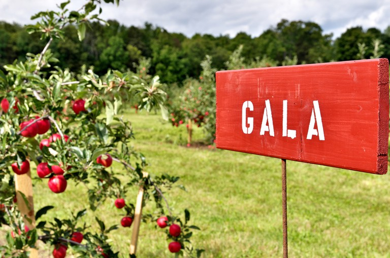Gala Apple Species Signs at a Pick Your Own fruit Orchard