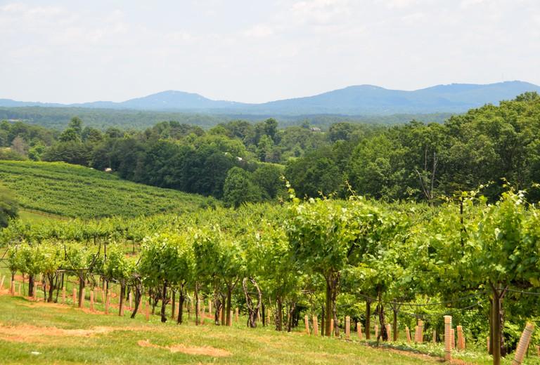 Scenic view of vineyard in Georgia