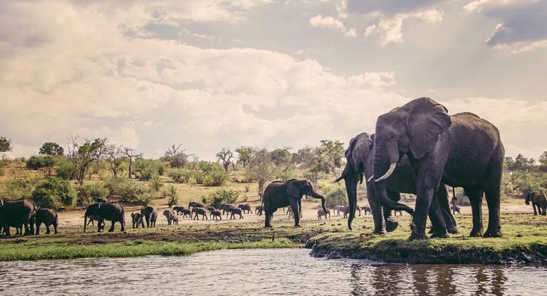 Elephants at waterside, Chobe National Park, Botswana