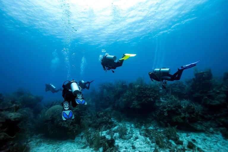 Scuba divers underwater around coral reefs, Majestic Point, Belize Barrier Reef