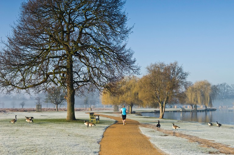 Young woman jogging in Bushy Park in the morning Richmond upon Thames Greater London England UK. Image shot 2008. Exact date unknown.