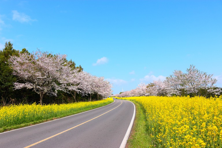 "Spring scenery of ""Noksan Road"" in Jeju, South Korea."