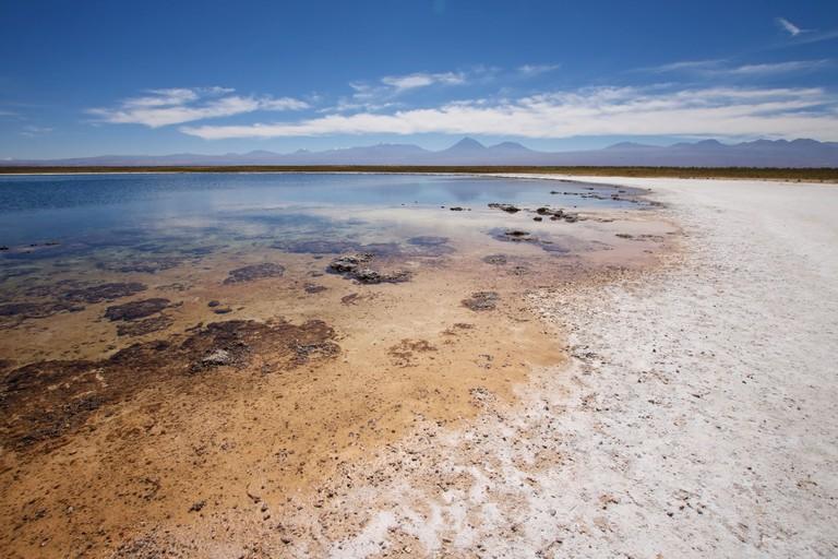 Cejar Lagoon, Atacama Desert.