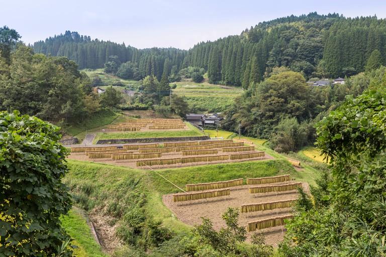 Rice Terraces in Kumamoto